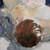 http://www.meller-art.co.il/Assets/Images/1/3/Small/arvm_12.jpg