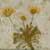 http://www.meller-art.co.il/Assets/Images/2/15/Small/chrzivt2.jpg
