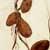 http://www.meller-art.co.il/Assets/Images/2/7/Small/snsnha_2.jpg