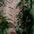 http://www.meller-art.co.il/Assets/Images/3/13/Small/irvk_2.jpg