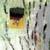 http://www.meller-art.co.il/Assets/Images/3/13/Small/nvp_irvk2.jpg