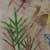 http://www.meller-art.co.il/Assets/Images/3/13/Small/prt_mdgl_lmdinha_avtvpit_2.jpg