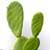 http://www.meller-art.co.il/Assets/Images/6/18/Small/kotsim.jpg
