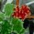 https://www.meller-art.co.il/Assets/Images/1/2/Small/geranium.jpg