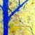 https://www.meller-art.co.il/Assets/Images/3/13/Small/azim_bshvrsh.jpg