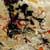 https://www.meller-art.co.il/Assets/Images/3/13/Small/mdbr.jpg