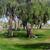 https://www.meller-art.co.il/Assets/Images/8/28/Small/44d_park_hapamvn_copy.jpg